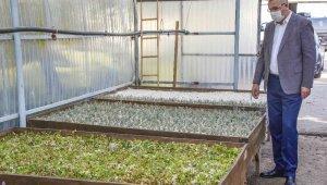 Karacabey'de tıbbi ve aromatik bitki üretimleriyle kırsal kesime katkı sağlanacak