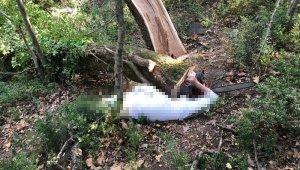 Kestiği ağacın altında kalan şahıs öldü