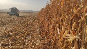 Mardin'de mısır hasadına başlandı