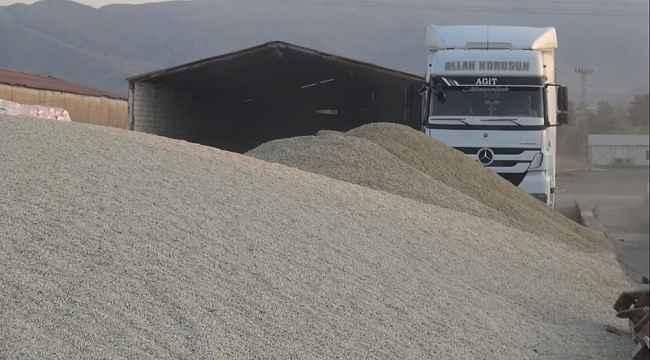 Muş'ta aspir hasadı yapıldı
