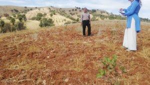 Sason'da fıstık ekimi yaygınlaşıyor