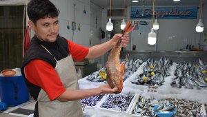 Sinop'ta 2 kiloluk kırlangıç balığı yakalandı