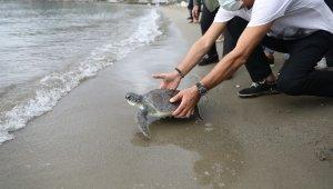 Tedavisi tamamlanan yeşil deniz kaplumbağası denize bırakıldı