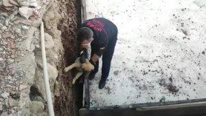 Temele sıkışan köpek kurtarıldı