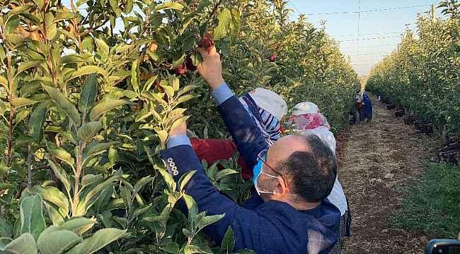Vali Erkaya Yırık, elma hasadına katıldı