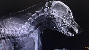 Yavru köpeği tüfekle yaraladılar