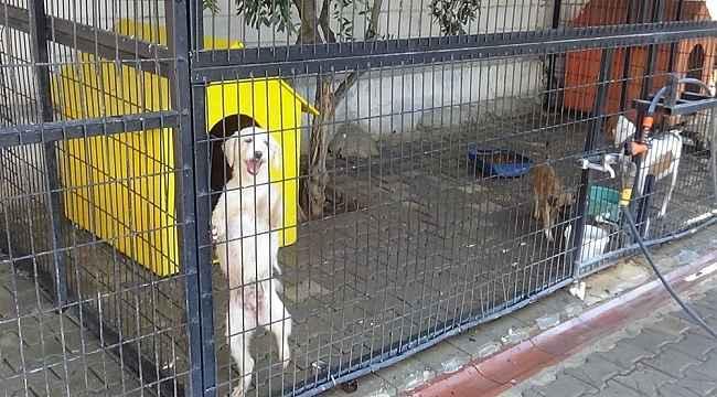 Yazlıkçıların sokağa terk ettikleri hayvanlara belediye sahip çıktı