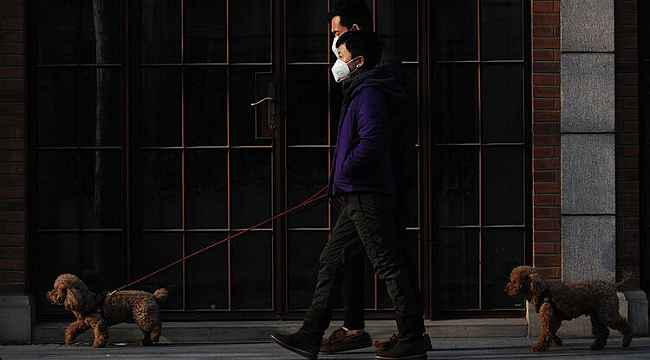 Akılalmaz köpek gezdirme yasağı... Üç kez ihlal edenlerin öldürülecek