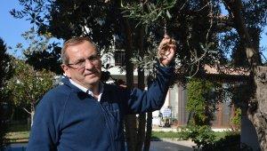 Ayvalık Zeytinyağı'nı taklit eden tağşişli markalarla savaş başladı