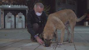 Belediye başkanı kısıtlamada aç kalan köpekleri elleriyle besledi