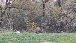 Bursa'da yabani hayvanlar şehre indi - Bursa Haberleri