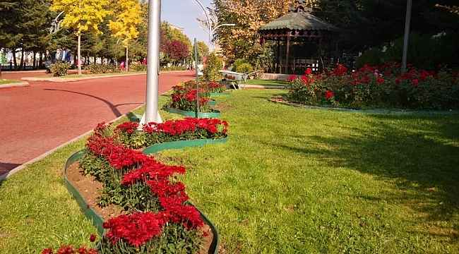 Keçiören'in parkları kasımpatılarla renklendi