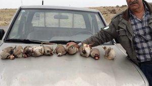 Kınalı keklikleri avlayan 5 şahıs yakalandı