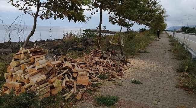 Kışlık odunlarını denizden temin ettiler