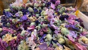 Korona virüse karşı aktarların yeni silahı hatmi çiçeği bitkisi