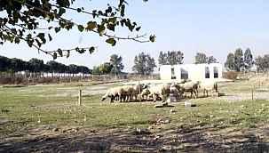 Seçimlerden önce görkemli törenle temeli atılan rehabilitasyon merkezi, koyun otlatma alanı oldu