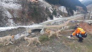 Trabzon'da sahipsiz canlar unutulmuyor