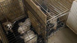 Başkent'te binanın bodrum katında 68 köpek bulundu