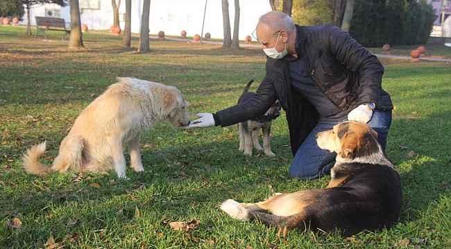 Emniyet Müdürü, sokak hayvanlarını elleriyle besledi