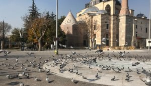Konya'da sokak ve caddeler sokak hayvanlarına ve kuşlara kaldı