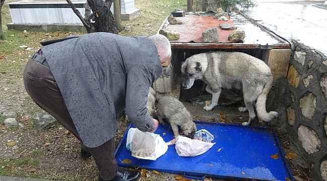 Aç kalan yavru köpeklerin yardımına Başkan Kıymaz yetişti