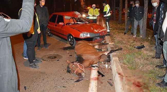 Ahırdan kaçan at, kazada telef oldu