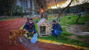 AK Parti gençlik kolları sokak hayvanlarını yalnız bırakmadı