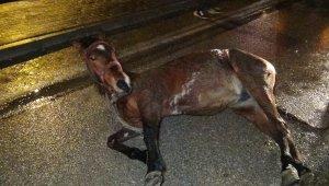 Aniden yola fırlayan başıboş at kazaya yol açtı - Bursa Haberleri