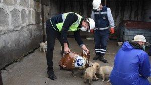 Arızayı gideren ekiplerin hayvan sevgisi
