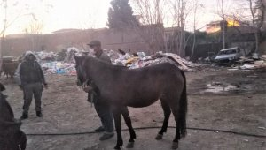 Atları kesenlere operasyon