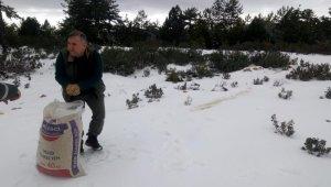 Aydın'da yaban hayvanları için dağlık alanlara yem bırakıldı