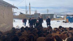 """Bayburt'ta """"Köyümde Yaşamak İçin Bir Sürü Nedenim Var Projesi"""" kapsamında çiftçilere koyunları teslim edildi"""