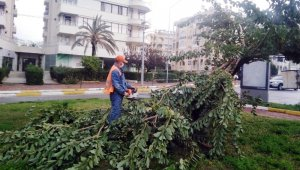 Büyükşehir fırtınadan devrilen ağaçlara müdahale etti