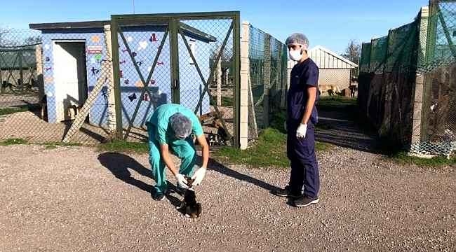 Cezayirli ve İspanyalı veteriner hekimlerden sokak hayvanlarına bakım ve tedavi