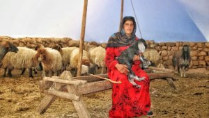 Çocukluğundan beri çobanlık yapan Ayten, 'anne şefkatiyle' kuzulara bakıyor
