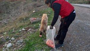 Daskut ekibi sokak hayvanlarını besledi