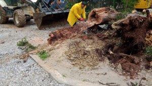 Didim Belediyesi yağış sonrası olumsuzlukları anında giderdi