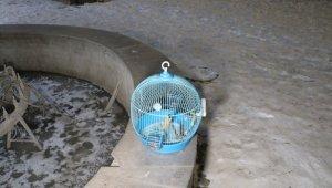 Dondurucu soğukla saatlerce kaybolan papağanı aradılar