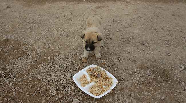 Eğitimcilerden sokak hayvanlarına yardım eli