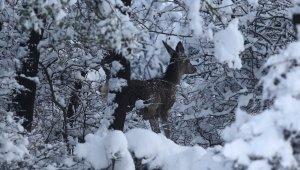 En şanslı geyikler... Üniversite bakıyor, milli parklar besliyor - Bursa Haberleri