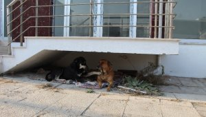 Ev sahibi kulübelerden rahatsız olunca olan sokak hayvanlarına oldu