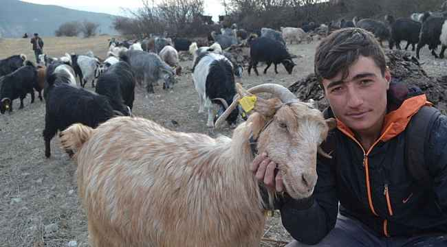 Genç çobanın hedefi veteriner olmak