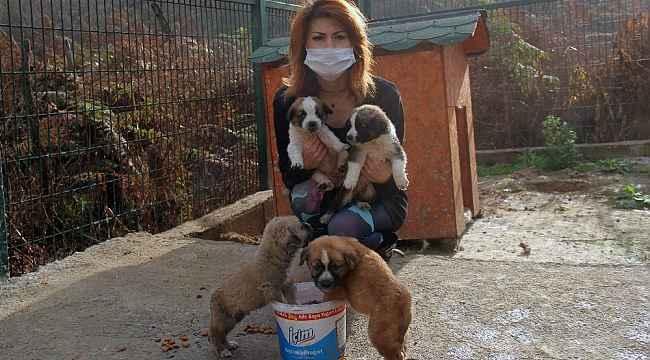 Giresun'da Çevre, Doğa ve Hayvanları Koruma polislik uygulaması hizmette