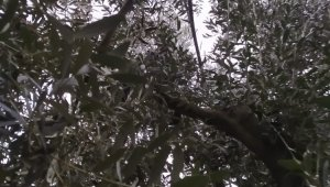 Hırsızlar köyün telefon kablolarını çaldı öğrenciler mağdur oldu - Bursa Haberleri
