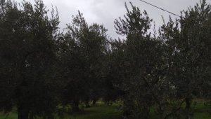 Hırsızlar köyün telefon kablolarını çaldı - Bursa Haberleri