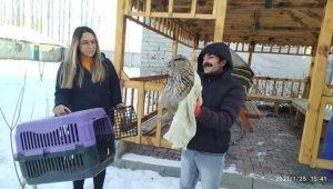 Iğdır'da yaralı puhu kuşu tedavi altına alındı