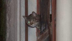 İş yerinde mahsur kalan kediyi itfaiye kurtardı - Bursa Haberleri