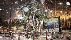 İzmit'in 600 yıllık zeytin ağacından kar manzarası