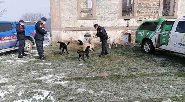 Jandarmadan sokak hayvanlarına yem