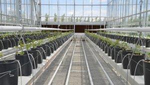 KAEÜ'de Jeotermal İleri Sera Teknolojileri ve Üretim Teknikleri Ortak Uygulama ve Araştırma Merkezi Kuruldu